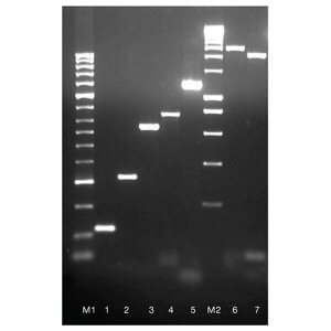 BIO-X-ACT Short DNA Polymerase    /  500 Units