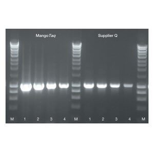 MangoTaq DNA Polymerase   /  5000 Units