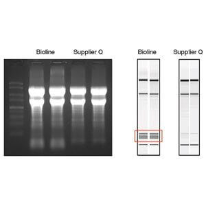 ISOLATE II Biofluids RNA Kit  /  50 Units